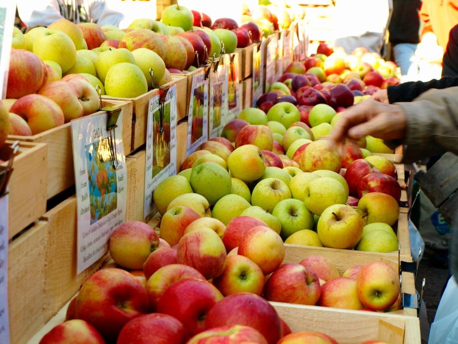 over 20 varieties of apples